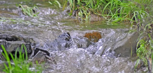 Het geluid van een kabbelend riviertje wat spontaan hoog ontspringt en zich een eigen weg baant naar het lager gelegen dal.